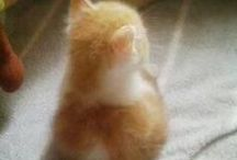 Pets - Cute ones / Just pets and animals being unbearably cute