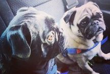 Animals & Pets / Huntington Toyota Scion loves all animals! Cute adorable puppies, kittens, dogs, cats, pugs, bunnies, turtles, funny pets, funny animals and more!