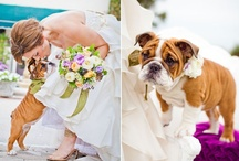 Pets at weddings / by Sincerity Bridal