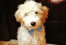 Dressed-up Dawgs! / by The Daily Puppy