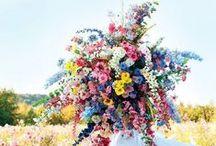 flower power / by Sarah Thompson