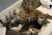 Here Kitty Kitty!! / by Victoria Davis