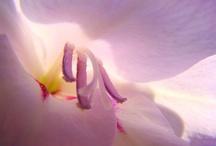 Flowers / by Wanda Raines