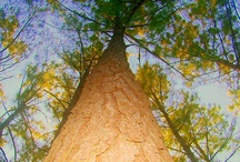 Trees Everywhere / by Wanda Raines