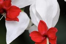 Flowers / by Kristine Mills