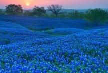 Texas / by Victoria Davis