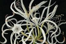 Plantas / Flora