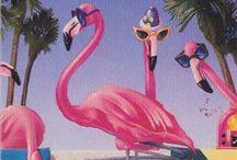 flamingos / by Isadora Zimmermann