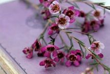 Moodboard // Lavender / by Joy Laforme