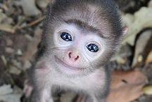 Animals / by Tech News 24h