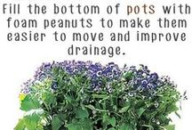 About: Planting Tips