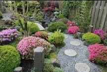 Gardening / by Mrs. Smith