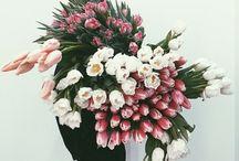 {flora} / by Natalie Simpson