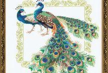 Peacocks. Muse