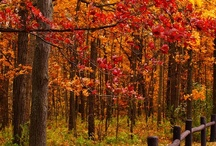 * Fall/Autumn/Thanksgiving * / My favorite season!!  I love the colors, the food and decorating my home. / by Rachel Rositas-Galicia