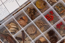 Montessori : Biology / We are Out of School Collaboraters : We love Montessori. But we're not afraid to bring other ideas in if they look like they will work for us. This is a collection of ideas we've seen and liked, and may or may not have used yet!