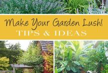 """Garden / """"To grow a garden is to walk with God"""" author unknown Board a collection of garden ideas,  tips, helps, and dreams. / by Dolores Bowen"""