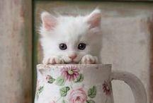 cute....whatever it is