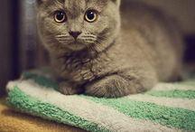 pets / by Zuuwa