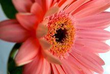 My Garden, My Favorite Flowers