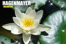 MUSIC / Songs and Instrumentals by HAGENMAYER / by HAGENMAYER