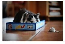 Feline Fantabulousness! / by Amy Wells