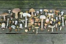 The Mushroom Collector / by Charlotte Eliza King