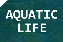 Aquatic Life || TAG / A collection of aquatic life. This board showcase all kind of aquatic life. If you are interested to join this board, follow TheAquariumGuide account and comment on the Board Cover pin.