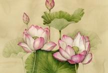 Botanical Drawings / by Jana Johnson