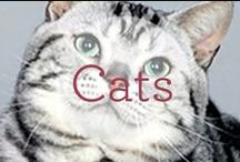 Cats / Anyone who has ever lived with a cat will tell you this... / by Dr. Harvey's