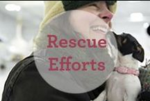 Rescue Efforts / May all animals know the love and care of a human... / by Dr. Harvey's