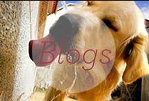 Dr. Harvey's Blogs / by Dr. Harvey's