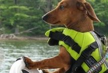 Keep all paws & tails on deck! / The cutest pictures of furry friends out on the boat / by Rinker Boats
