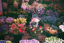 Flowers, Gardens, Plants, & Outdoors