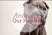 Animals: Our Heroes / by Dr. Harvey's