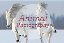 Animal Photography / Capturing the moment...