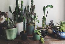 Plants / by Darcy Stice