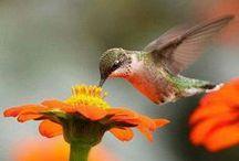 Happy Hummingbirds...