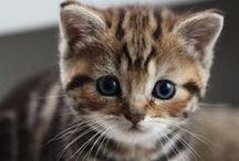 Cuteness of Kittens