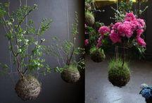 Kokedama and hanging gardens.