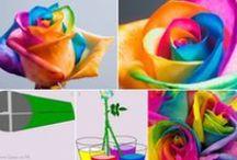 Color Week / by Julie Reid