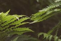 Fern - bamboo - moss / Everything with ferns and/or bamboo, two beautiful plants.