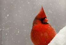 birds / by PDO