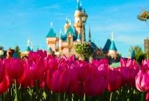 Disney / by Jenny Freemire