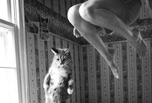Cats. / by Kate Auringer