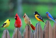 Feathered Friends / Birds, bird, hawks, doves, crows, robins, bluejays, finches, wrens, sparrows, seagulls, wood peckers, sea gull, cardinals / by Spirit Healer