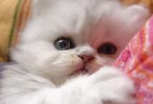 cute animals / by Jessica Marihugh