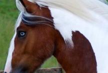 Horses / by Melanie Cummings