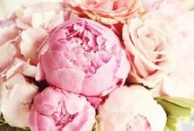 Flowers  / by Krista
