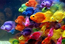 ♥Colorful Fishes